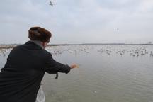 میزبانی با طعم مهربانی از پرندگان زمستان گذر در مازندران