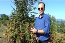 رهاسازی یک بهله عقاب پس از تیمار در زیستگاههای شفت