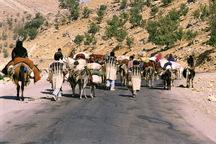 آغاز کوچ پاییزه عشایر چهارمحال وبختیاری به مناطق گرمسیری