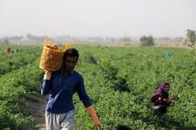 17 هزار کشاورز خراسان شمالی مشمول بخشودگی وام بانکی هستند