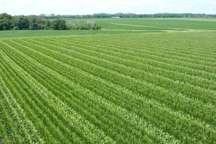 کشاورزی کهگیلویه و بویراحمد در فصل برداشت دولت یازدهم