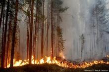 عکس/ آتش سوزی گسترده در جنگل های سوئد