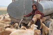 مصرف خوراک دام عشایر خراسان شمالی کاهش یافت