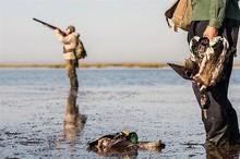 غم تالاب های گلستان از شکار پرندگان مهاجر