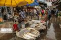 بازار رشت در قرق ماهیان پرورشی