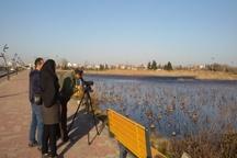 سرشماری زمستانه پرندگان در لنگرود انجام شد