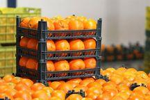 180 تن میوه شب عید در بازار ماکو توزیع می شود