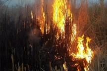 روحانی وزارت خارجه را مامور حریق هورالعظیم کرد/ درخواست کمک از سپاه برای مشارکت در خاموش کردن آتش سوزی