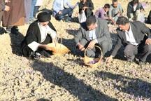 سومین جشنواره زعفران ، طلای سرخ بهاباد آغاز شد
