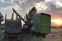 پیش بینی تولید 25 هزار تن گندم در سلماس   افزایش 10 تا 15 درصدی نسبت به پارسال