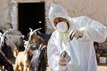 119 فرد مبتلا به تب مالت در کبودراهنگ شناسایی شدند