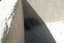 3 قلاده گراز گرفتار درآب در بویراحمد نجات یافتند