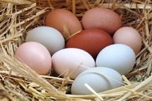 همه چیز در مورد نگهداری و مصرف تخممرغ