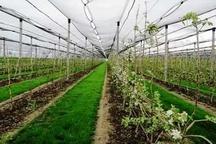 بخشی از کشت و صنعت مغان به جهاد کشاورزی واگذار می شود
