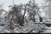 قطعی برق در برخی از مناطق چهاردانگه استقرار 4 اکیپ برق رسانی