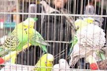 ساماندهی پرنده فروشیهای کرج آغاز شد