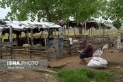بازار فروش دام زنده در آستانه عید قربان در مازندران