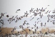 تالاب میقان اراک جزو 105 منطقه مهم پرندگان در شبکه جهانی تنوع زیستی است