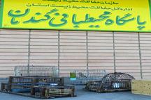 دستگیری متخلف زنده گیری پرندگان زینتی در گندمان