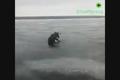 نجات گوزن از روی رودخانه یخ زده