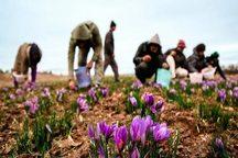 عنبرآباد تحقق 100 درصدی اشتغال در کشاورزی را رقم زد