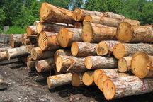 متلاشی شدن باند قاچاق درختان جنگلی در ساری