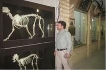 بازدید رایگان از موزه تاریخ طبیعی اداره کل محیط زیست لرستان به مناسبت هفته دولت