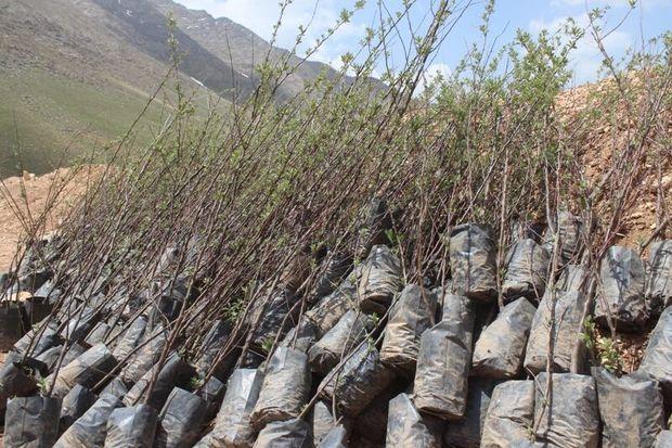برنامه کشت پاییزه نهال در استان مرکزی متاثر از تغییرات اقلیم است