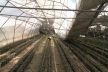 هیچ یک از گلخانه های مهاباد تحت پوشش خدمات بیمه نیستند