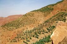 جنگلکاری 50 هکتار از اراضی طیخور  اجرای طرح آبخیزداری در زرجه بستان