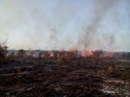 آتش سوزی 11 هکتار از پوشش گیاهی میانکاله