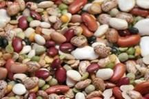 190 تن بذر لوبیا اصلاح شده خمین در کشور توزیع شد