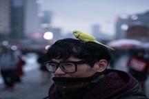 عکس/ اعتراض با پرنده خانگی