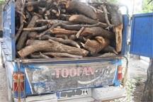 حدود یک تن چوب قاچاق در قلعه رئیسی کشف شد