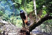 واکنش اهالی یک روستا به جنگل تراشی در چالوس
