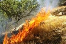 آتشی که تابستان بر خرمن طبیعت می زند - عبدالله رحمانی*