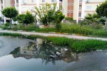 بوی بد فاضلاب مشکل جمعی از شهروندان ساکن در مسکن مهر قائمشهر