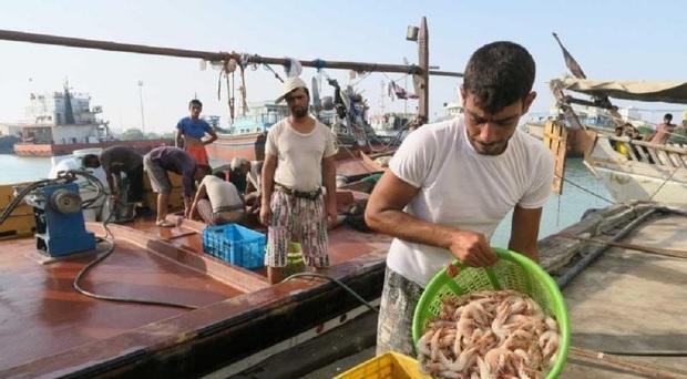 صید میگو در آبهای هرمزگان 22 درصد افزایش یافت