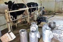 روزانه 100 تن شیر در خراسان جنوبی تولید می شود