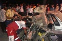 شتر راننده پراید را در محور تبریز - ارومیه کشت