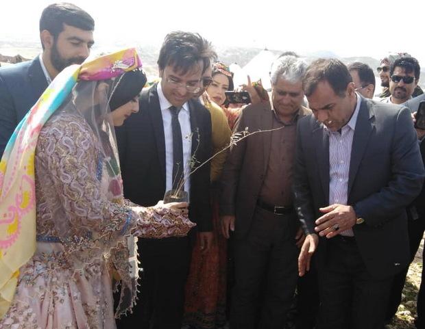عروس فراشبندی،کاشت 120 نهال را مهریه خود تعیین کرد