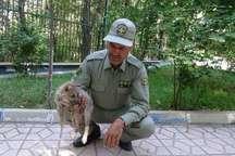سه توله گرگ حفاظت شده برای تعیین تکلیف نهایی به سازمان محیط زیست منتقل می شوند