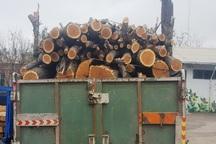مقادیری چوب آلات و اصله گرده بنه قاچاق در اردبیل  کشف شد