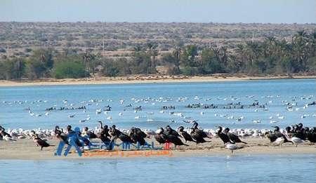 حقابه تالاب حله استان بوشهر سالانه 55 میلیون مترمکعب اعلام شد