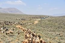 350 هزار راس دام بیش از ظرفیت مراتع  در قزوین وجود دارد