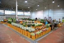 خمینی شهر بزرگترین تولید کننده گل در استان اصفهان است