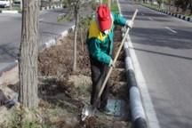 سرانه فضای سبز در رفسنجان به بیش از 17 متر مربع رسید