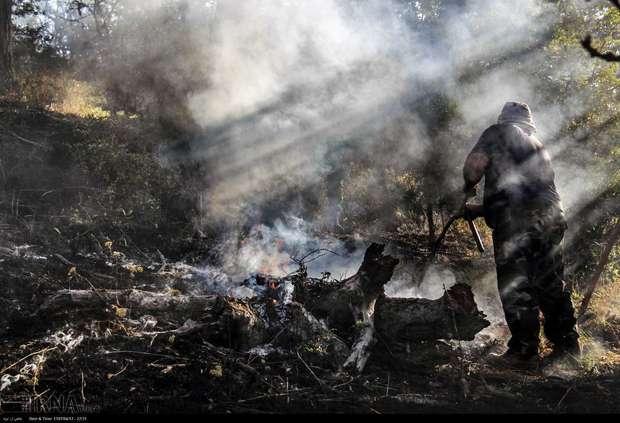 حیواناتی که در آتش انسانها سوختند