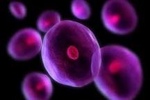 بانک سلول های بنیادین پشتوانه ای برای درمان سرطان خون و کم خونی های شدید