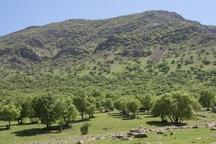 77 نفر از مراتع و جنگل های کردستان حفاظت می کنند